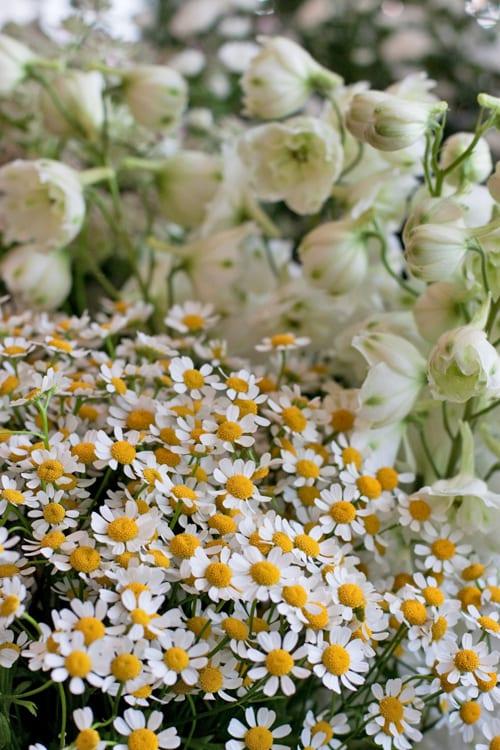 McQueens-Florist-Flowerona-1