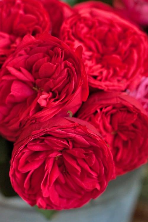 McQueens-Florist-Flowerona-2