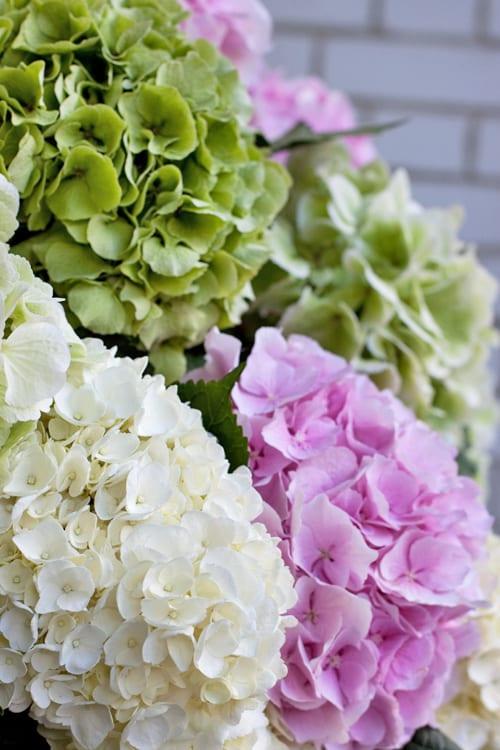 McQueens-Florist-Flowerona-7