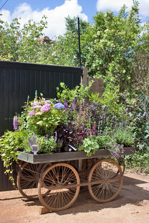 Petersham-Nurseries-Flowerona-1