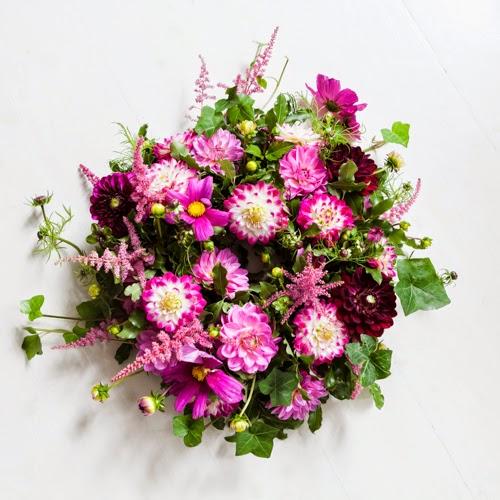 Flowerona Vanessa Birley Dahlia-18