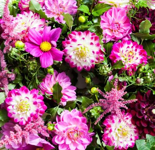 Flowerona Vanessa Birley Dahlia-19