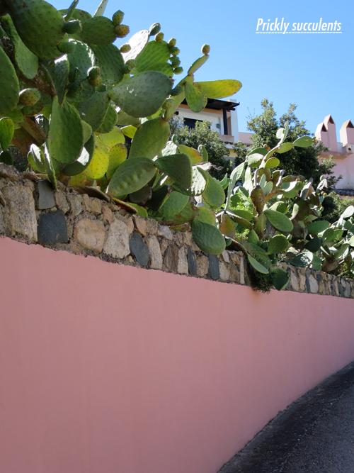 Sardinia-Flowerona-1