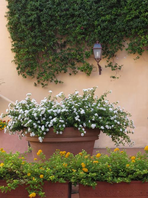 Sardinia-Flowerona-10