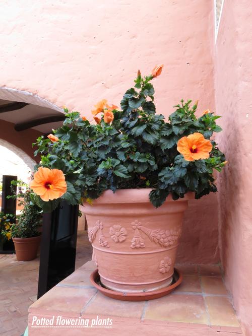 Sardinia-Flowerona-12
