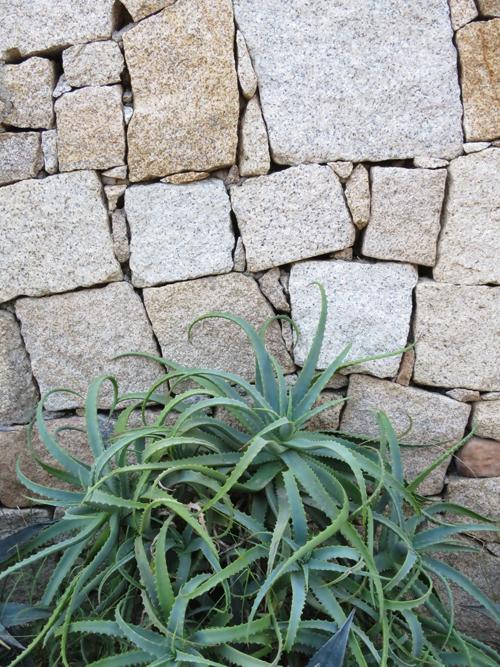Sardinia-Flowerona-5