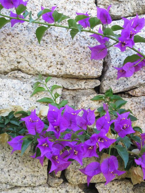 Sardinia-Flowerona-6