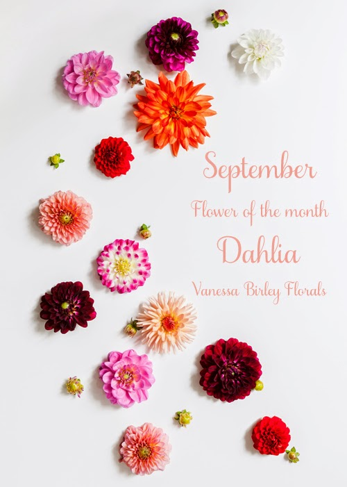Flower of the Month – The Dahlia…A guest post by Katie Spicer, in collaboration with Vanessa Birley