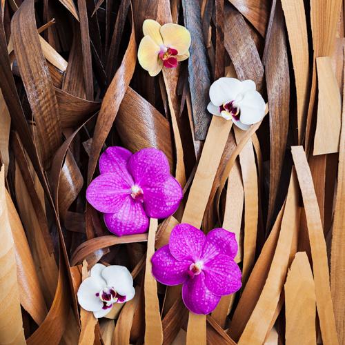 Flowerona Helen Cranmer Orchid-1