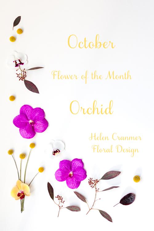 Flowerona Helen Cranmer Orchid-11
