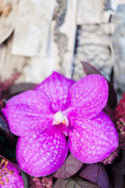 Flowerona Helen Cranmer Orchid-3