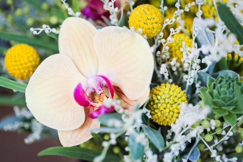 Flowerona Helen Cranmer Orchid-5