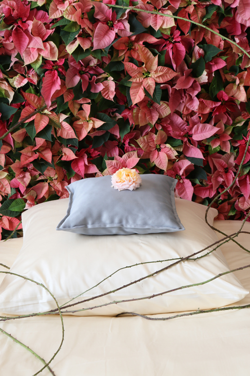 06-Sleeping-Beauty-Poinsettias-Flowerona-2