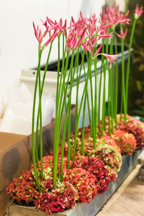 Bloomsbury Flowers Ham Yard Village Flowerona-18
