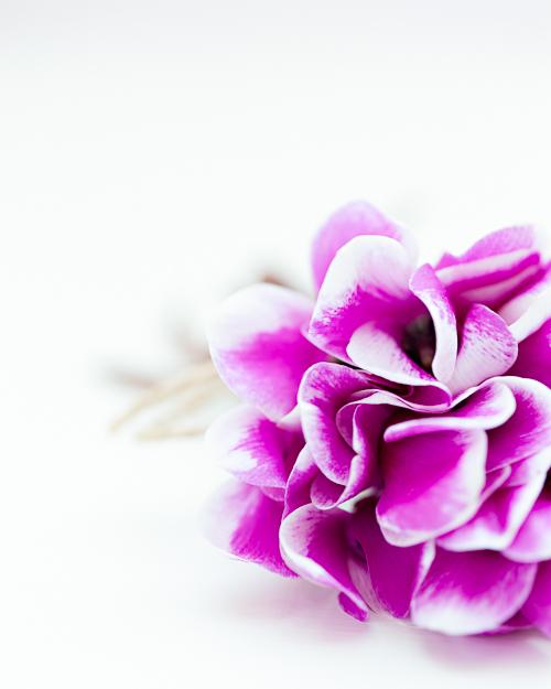 Flowerona Ann Briggs Cyclamen-11