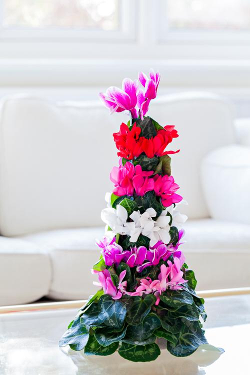 Flowerona Ann Briggs Cyclamen-7