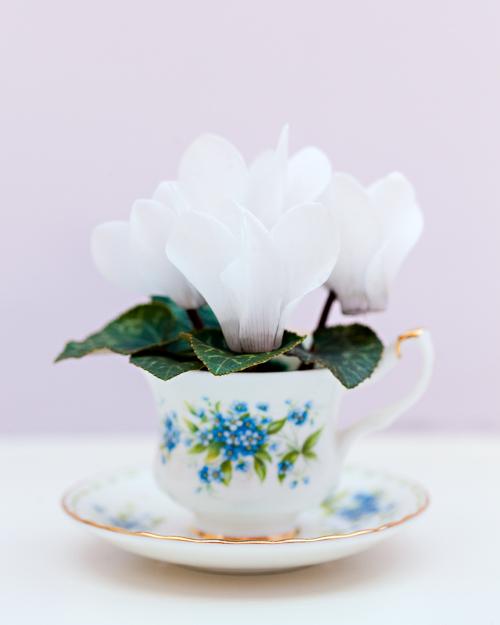 Flowerona Ann Briggs Cyclamen-8