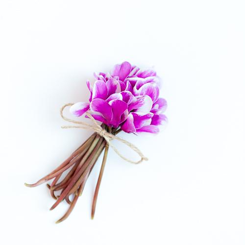 Flowerona Ann Briggs Cyclamen-9