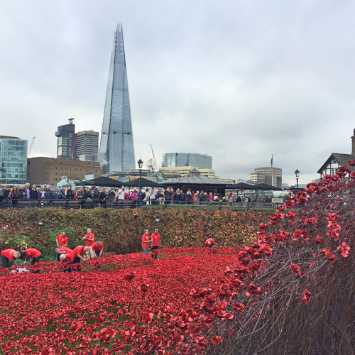 Tower-of-London-Poppies-Flowerona-1