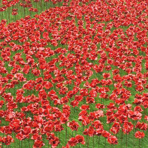 Tower-of-London-Poppies-Flowerona-2