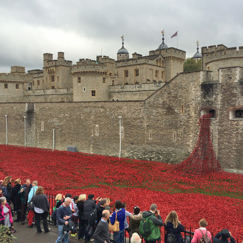 Tower-of-London-Poppies-Flowerona-3