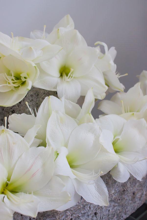 Mary Jane Vaughan Festive Open House 2014 Flowerona-42