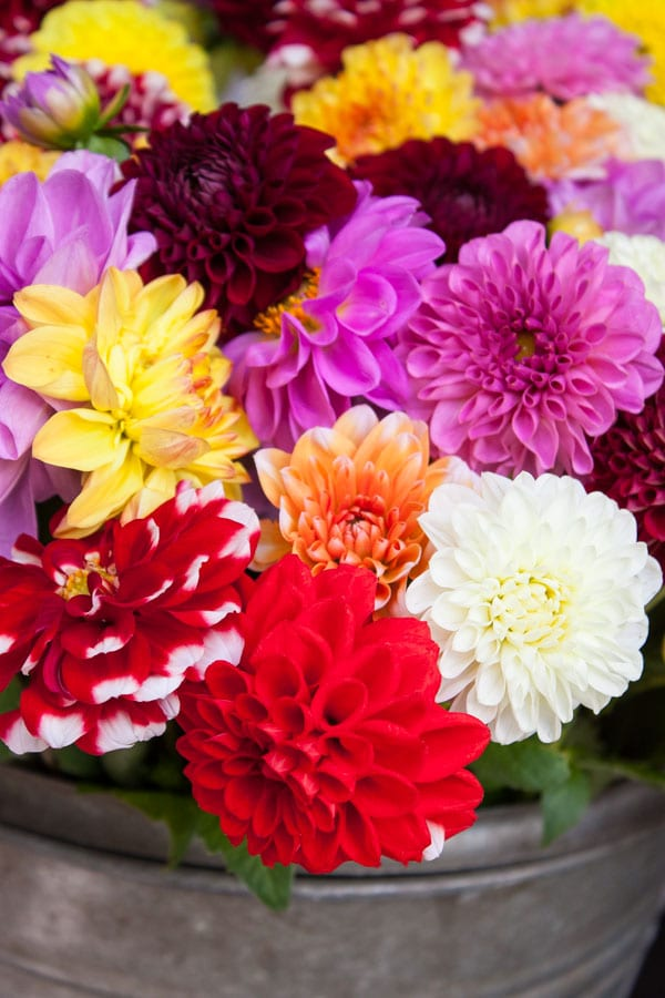 Himmel & Erde Florist Hamburg Flowerona-4