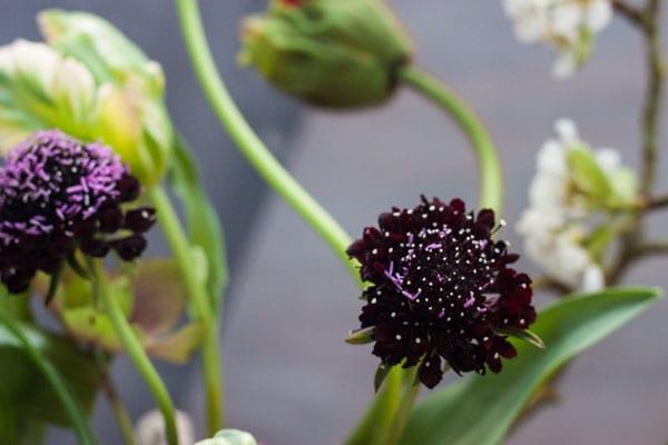 Sabine Darrall G Lily Flower School-Flowerona_-11