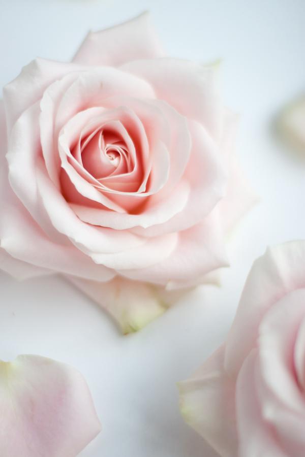 The Rose Of Avalanche - L.A. Rain - The Singles Album