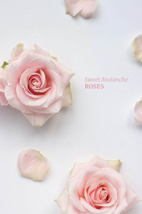 Rose Of Avalanche, The - Too Many Castles In The Sky