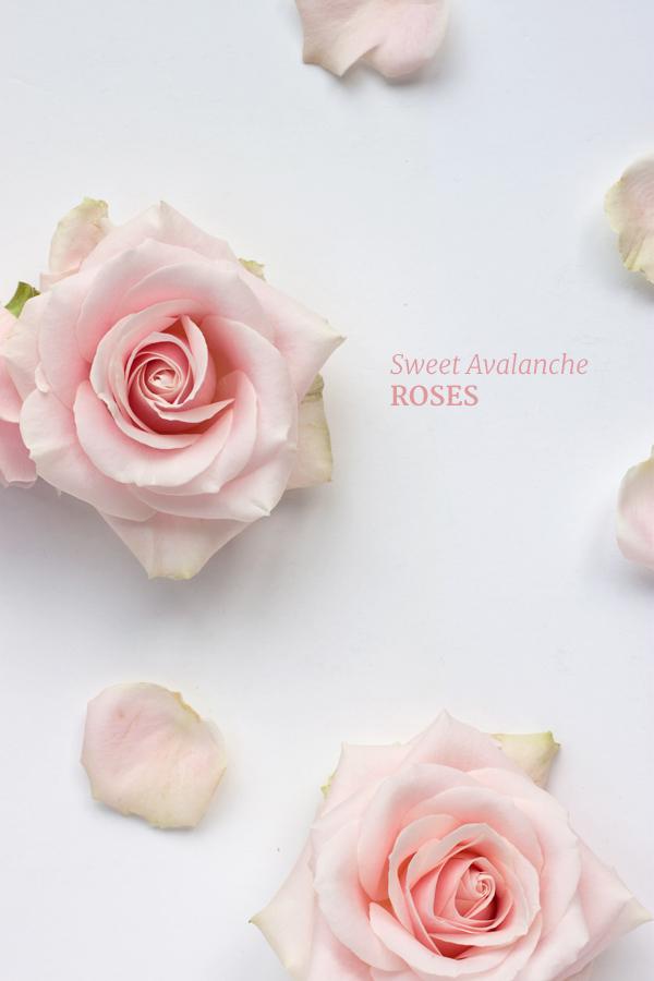 Sweet-Avalanche-Flowerona-5