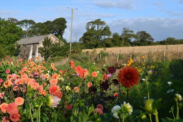 The-Garden-Gate-Flower-Company-Flowerona-6