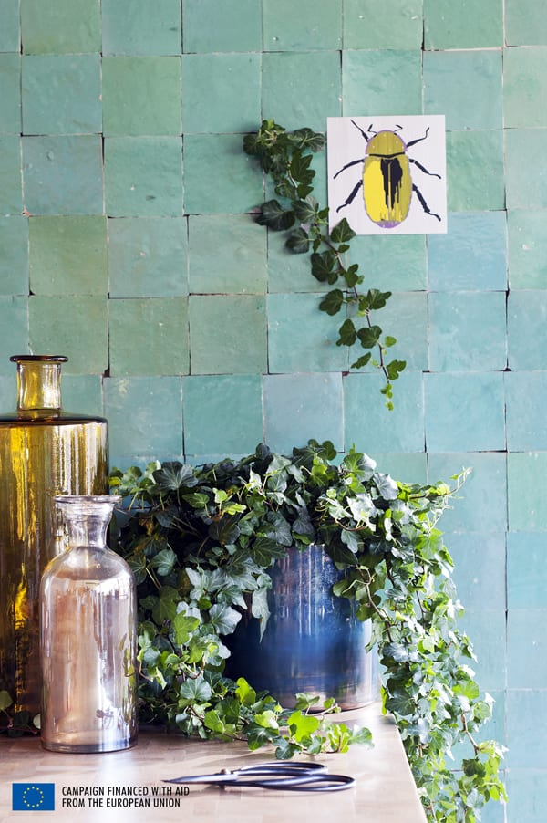 Houseplant-of-the-Month-Ivy-Flowerona-1