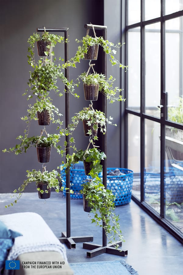 Houseplant-of-the-Month-Ivy-Flowerona-2