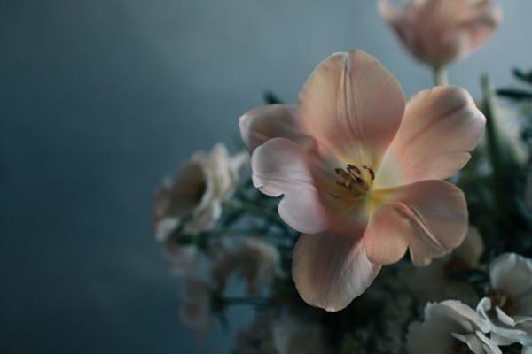 Jo-Flowers-Flowerona-10