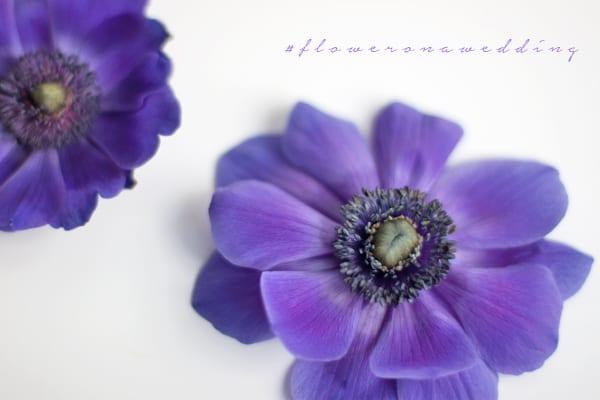 Flowrona-Anemone-600 copy