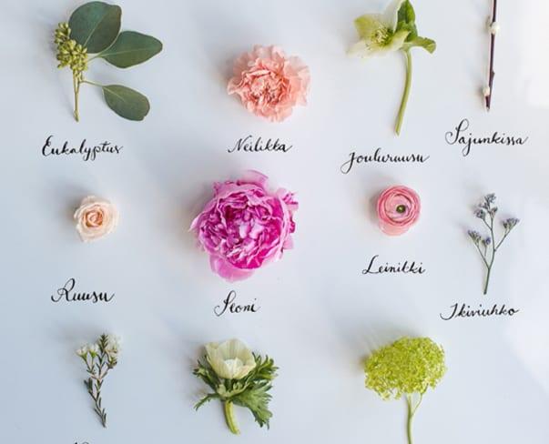 Flowerona Links : With seasonal blooms, interviews & a teacup…