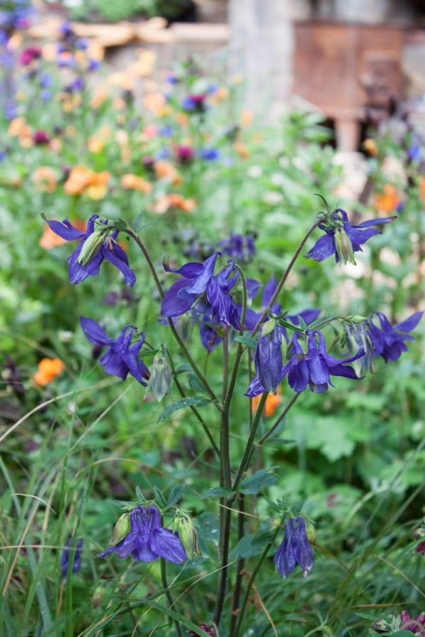 Artisan Garden RHS Chelsea Flower Show 2015 Flowerona-42