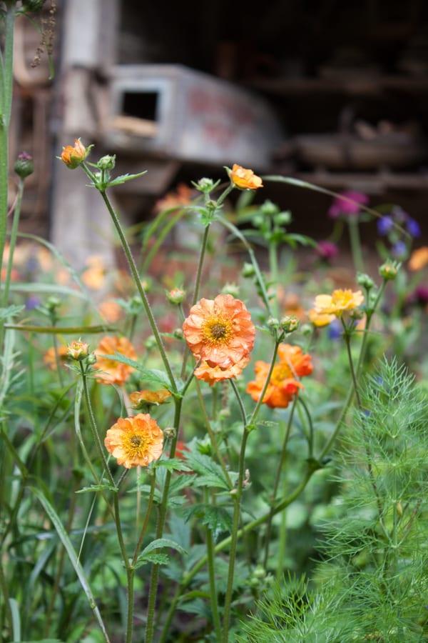 Artisan Garden RHS Chelsea Flower Show 2015 Flowerona-43