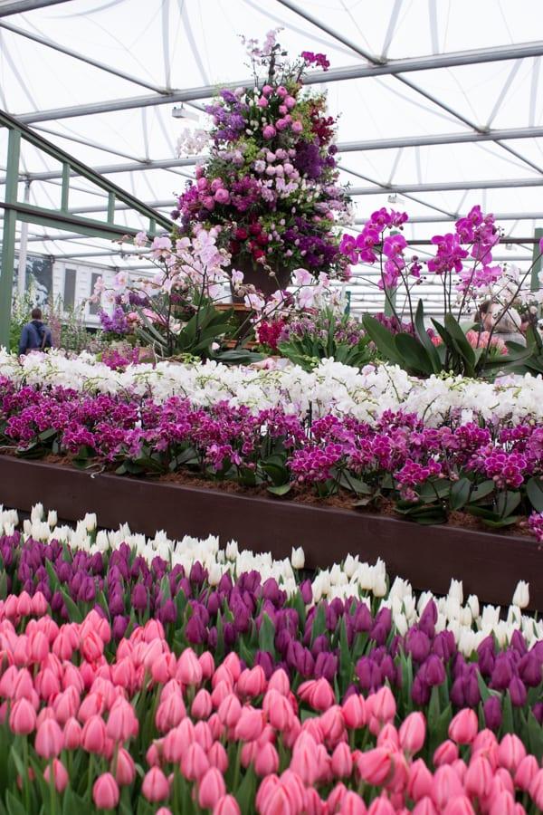 Marks & Spencer RHS Chelsea Flower Show 2015 Flowerona-4