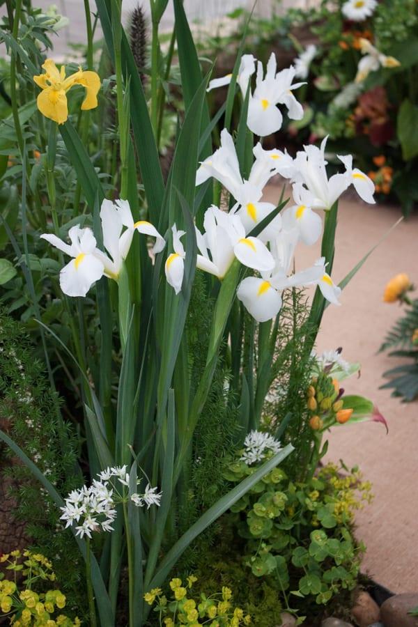 NAFAS Exhibit RHS Chelsea Flower Show 2015 Flowerona-7
