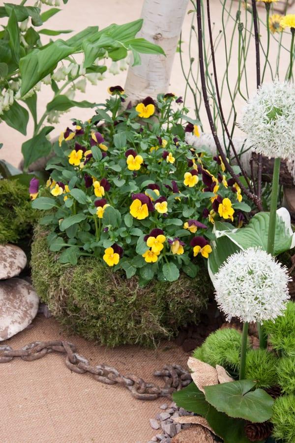 NAFAS Exhibit RHS Chelsea Flower Show 2015 Flowerona-8
