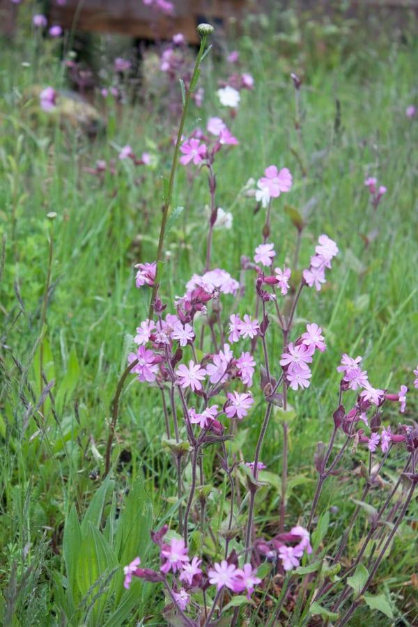 The Laurent-Perrier Chatsworth Garden Dan Pearson RHS Chelsea Flower Show 2015 Flowerona-2