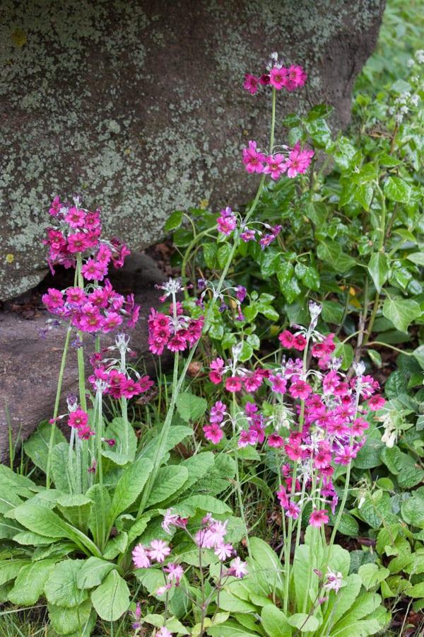 The Laurent-Perrier Chatsworth Garden Dan Pearson RHS Chelsea Flower Show 2015 Flowerona-4