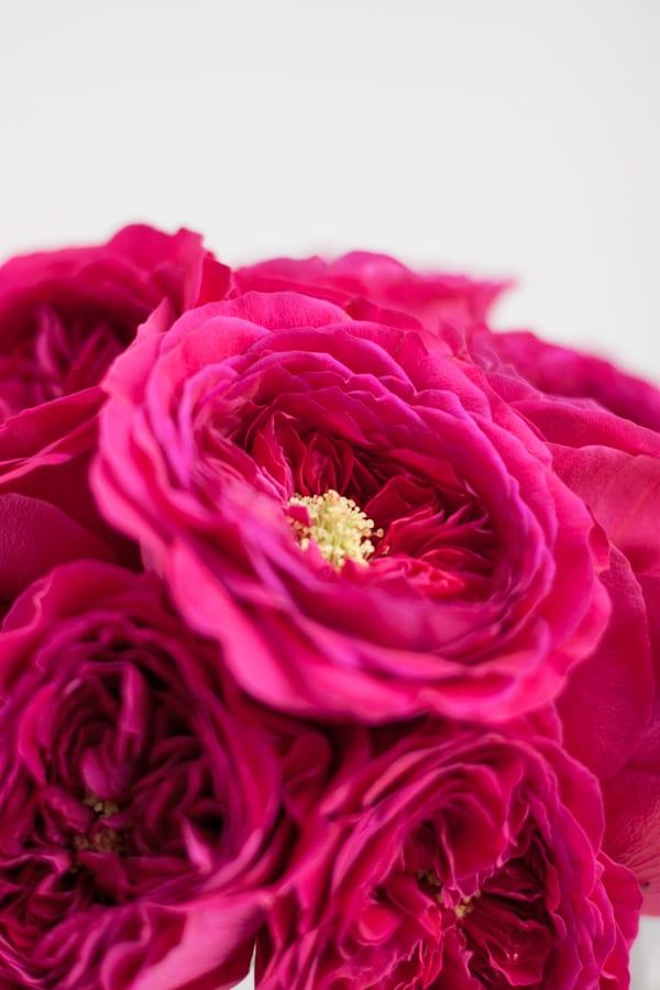David-Austin-Rose-Alexandra-Farms-Flowerona-Darcey