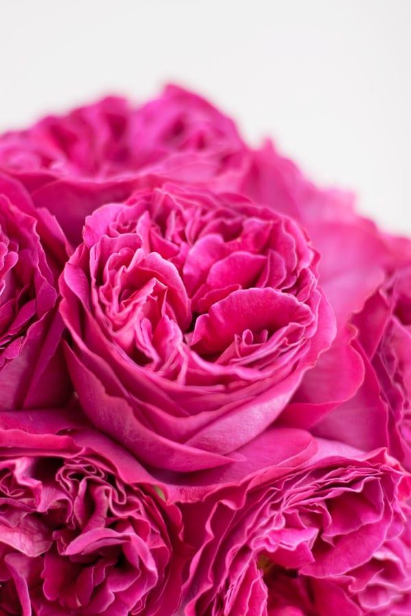 David-Austin-Rose-Alexandra-Farms-Flowerona-Kate