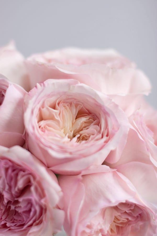 David-Austin-Rose-Alexandra-Farms-Flowerona-Keira