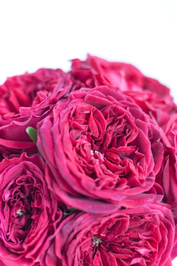 David-Austin-Rose-Alexandra-Farms-Flowerona-Tess