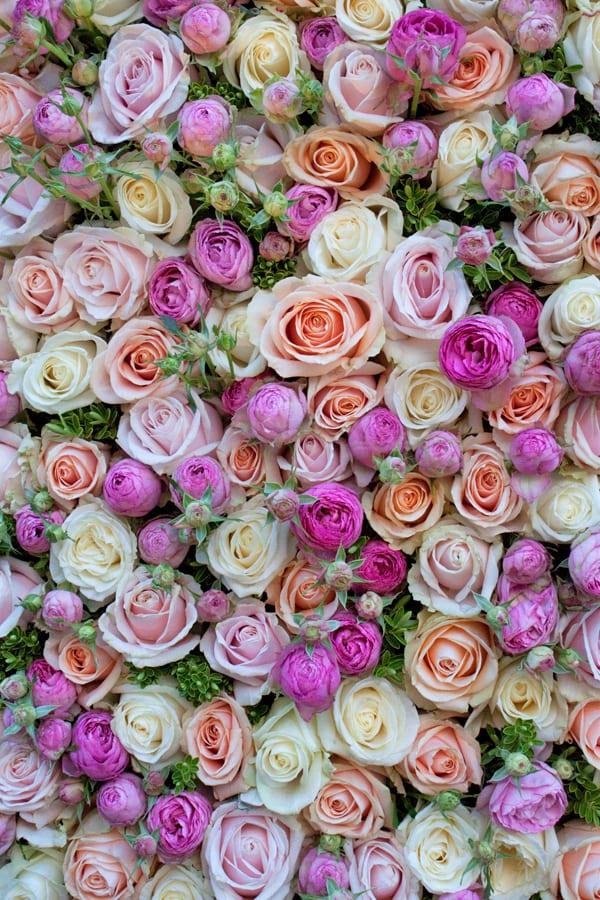 Neill-Strain-The-Celebration-of-the-Rose-Flowerona-5