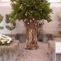 RHS-Hampton-Court-Palace-Flower-Show-2015-Flowerona-JP-Feature